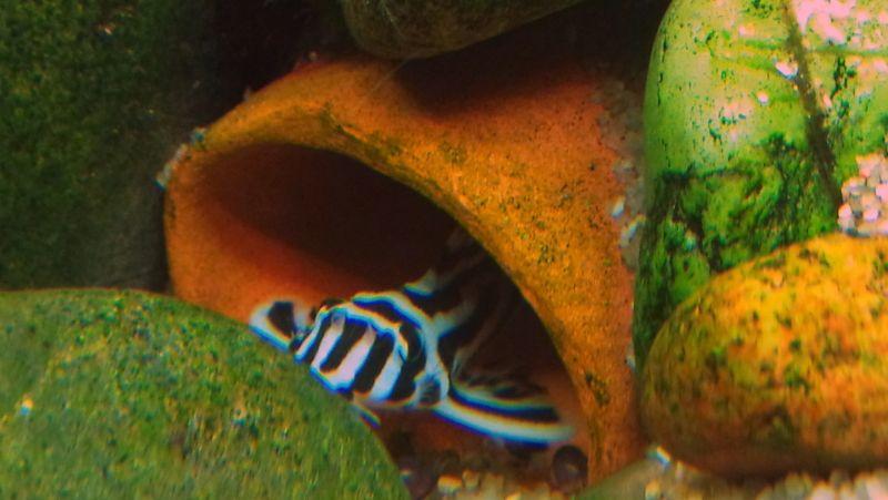 """Concours photos """"le poisson et son environnement aquatique"""" - Oscar le poisson  - vote Photbon1"""