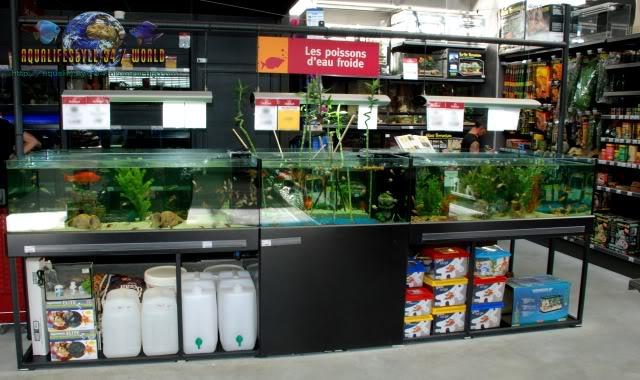 Store french ( Delbard Montpellier) DSC_0077