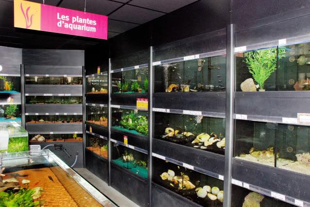 Store french ( Delbard Montpellier) DelbardMontpellier2