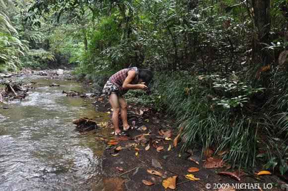 The EQUATOR de kobayashi yosuke - aquarist et botaniste du Japon 6096_123693283527_707568527_2547837