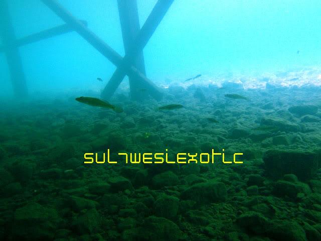 une eau adapté au biotope des lacs de sulawesi Boedini