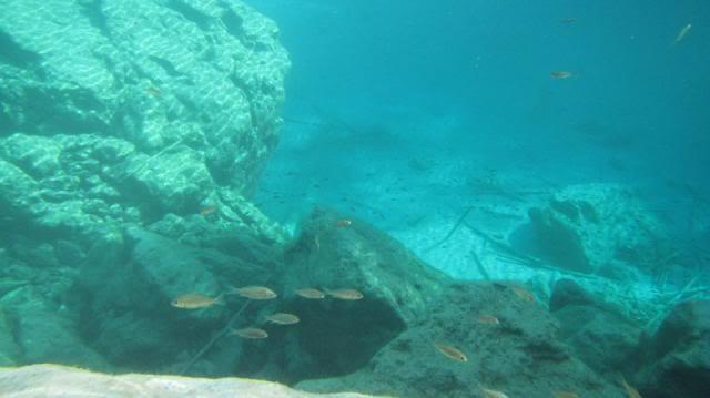 Aquarium à la maison - Melanotaenia boesmani  Lacayamaru