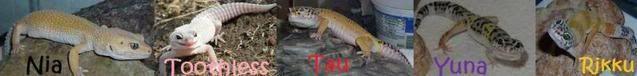 Youtube ad*WARNING PIC AND VIDEO HEAVY* Mygeckossignatureredo-1