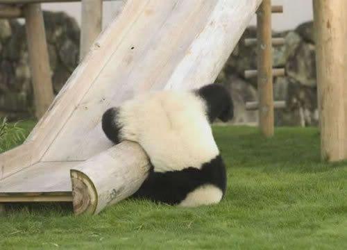 Random Picture Thread Pandafall