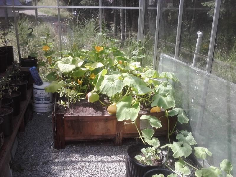 Greenhouse 2012 023