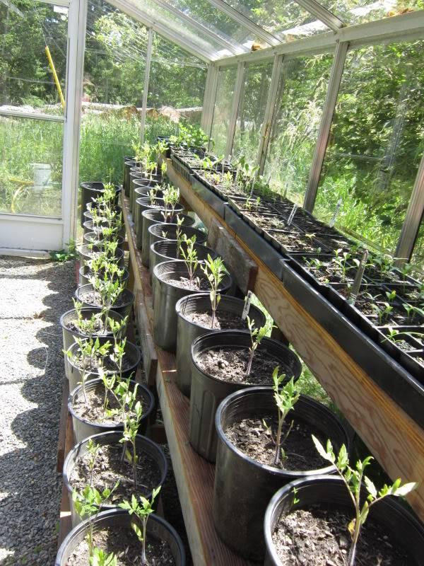 Greenhouse 2012 Birdsandgarden020