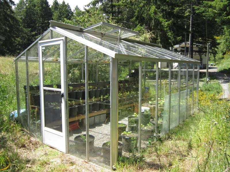 Greenhouse 2012 Birdsandgarden022