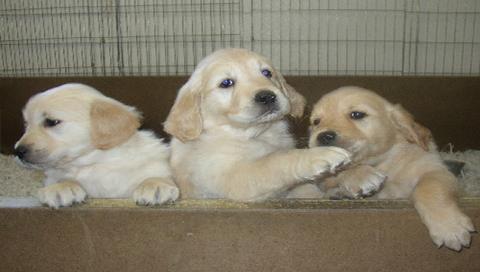 aXe šuniukai 3dogs