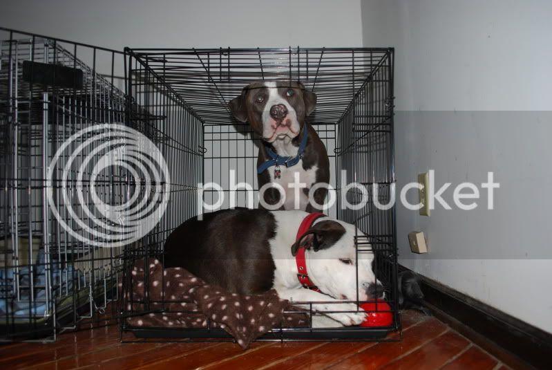 My dogs DSC_2952
