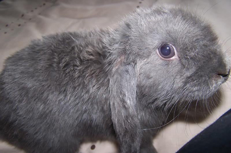 Forum Members Rabbits 100_3733