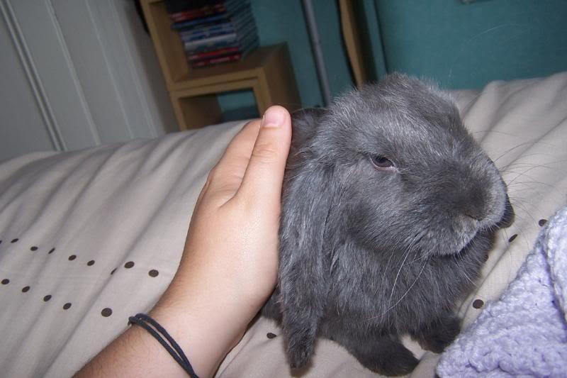 Forum Members Rabbits 100_3772