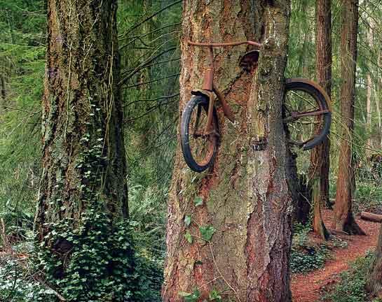 أغرب مارأيت من أشجار 1241223134