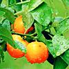 vreau sa imi dai........................... - Pagina 5 Orange015