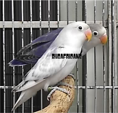 Post your favorite birds S2500120