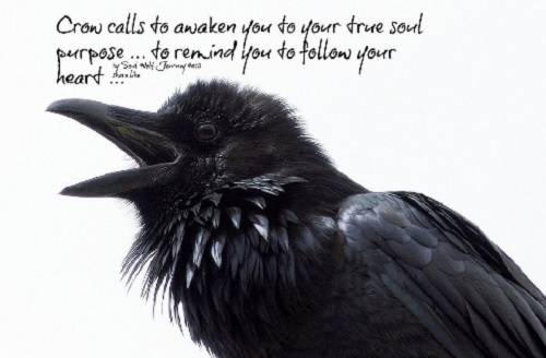 Thought for the Day - Page 3 I_Crow_callstoawakenyou_500-328_zpsgj8jjhc4