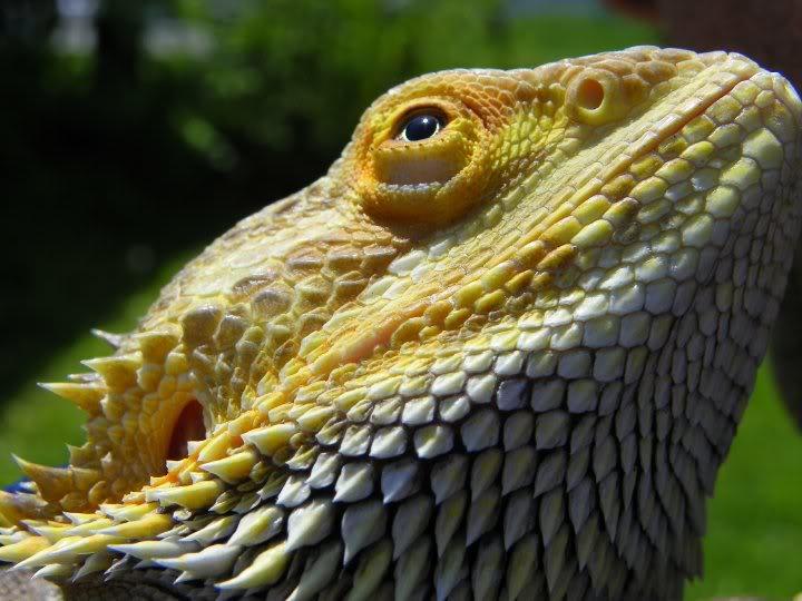 Hi, from the Greenback=Maryville area :) Godzilla