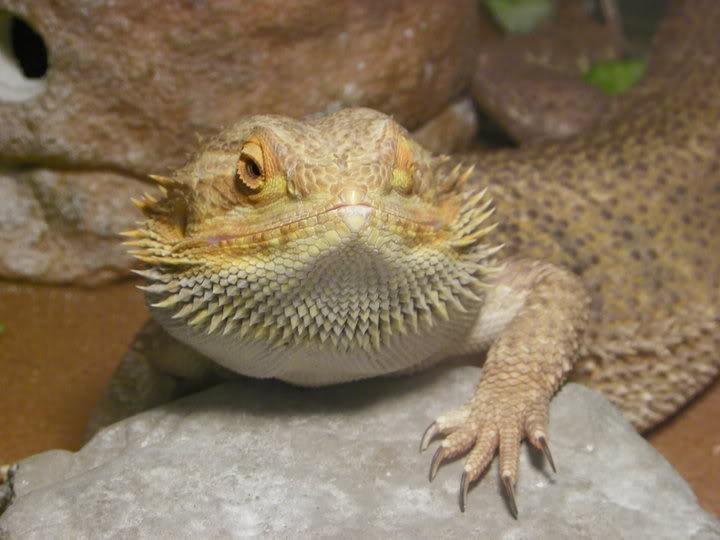 Hi, from the Greenback=Maryville area :) Godzilla3