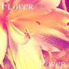 Gallerie de CrazyJoy. Flowerpower