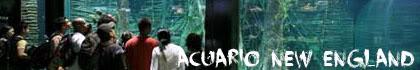 Acuario new england