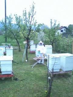 """HS"" Kosnica 042609130851"