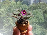 Cateva plante accent Th_DSCF3039_b