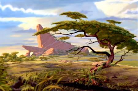 Acacia Findelasemana