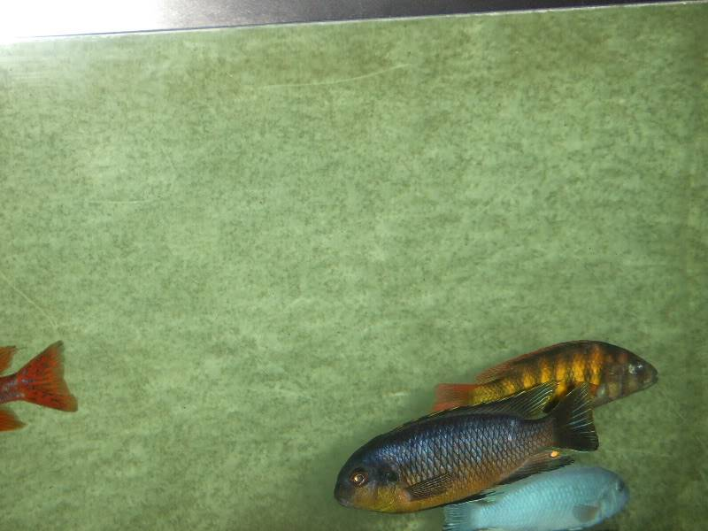 here are some pics of some of my fish 2009_06270018