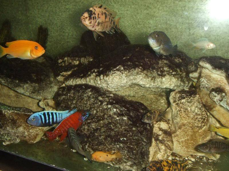 here are some pics of some of my fish 2010_02020023