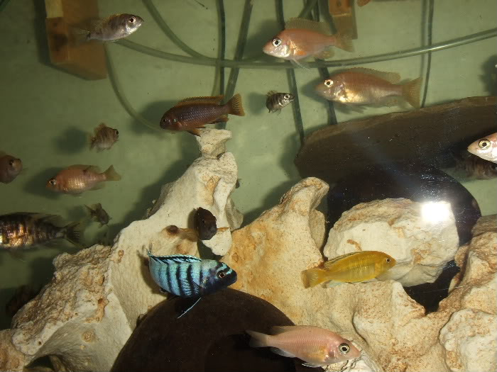 here are some pics of some of my fish 2010_06260007
