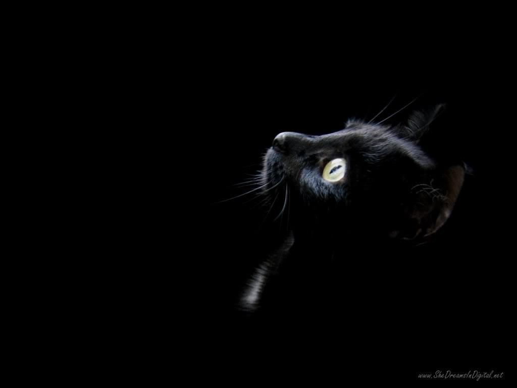 Some cute wallpapers I found (almost are black and blue) Black_wallpaper_cat_head_1024x768