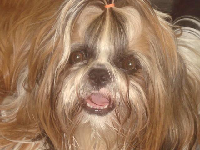 Dog With The Cutest Smile part 2 Editedjosh