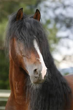 ..;Equine;.. Spanish2