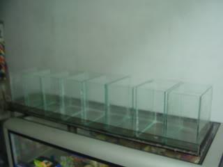 Tremendo Filtro de Agua para Bettas P1010541