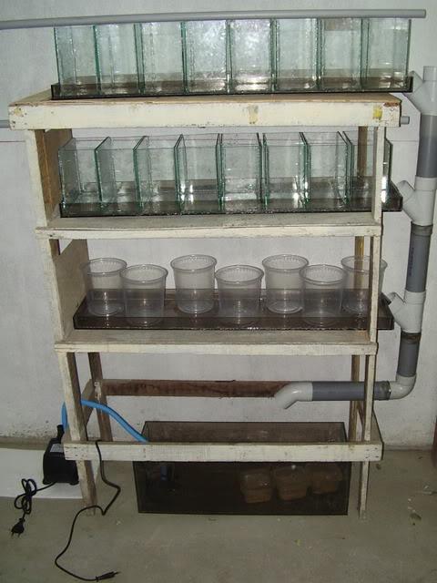 Tremendo Filtro de Agua para Bettas Gtere