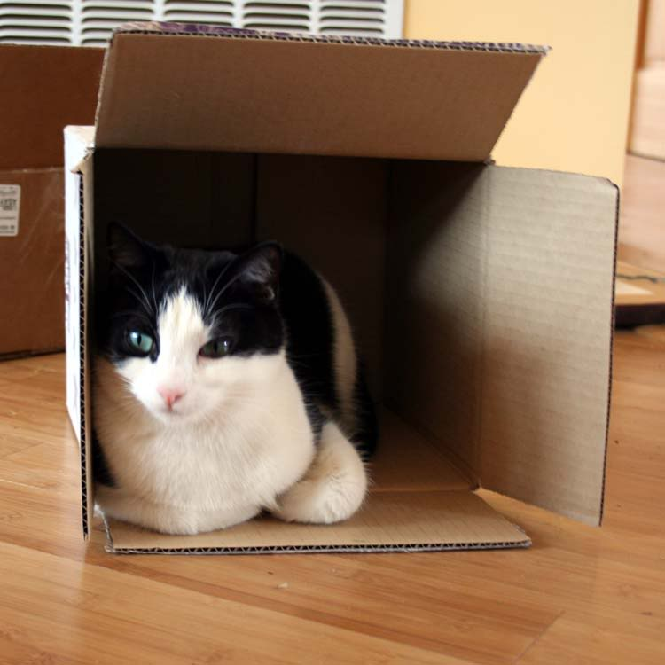 Gattilicious  =^.^= Cats257