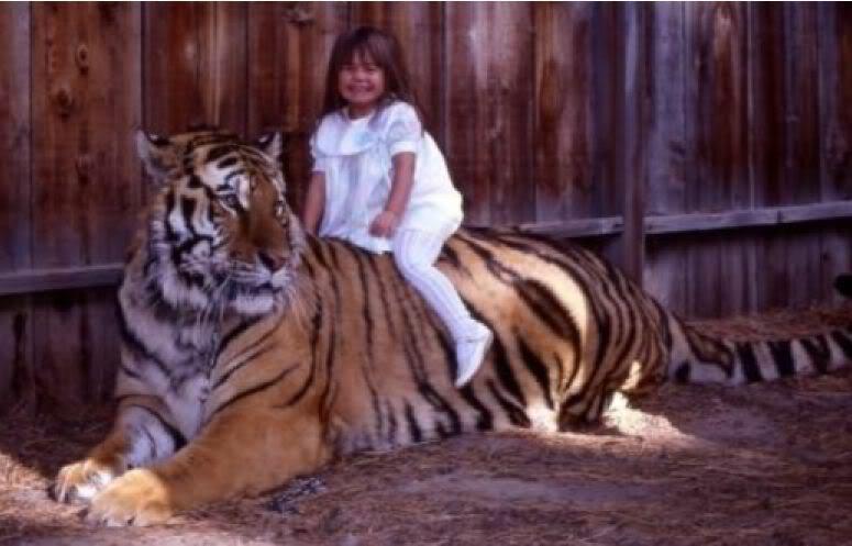 Comparação de  tamanho entre  animais  e   Seres humanos - Página 2 Saber2