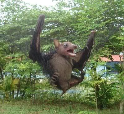 Netting Birds & Bats To Eat : Thailand Bat1