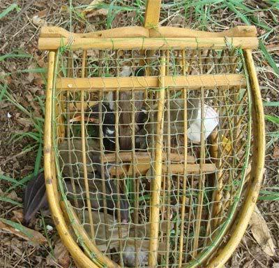 Netting Birds & Bats To Eat : Thailand Bat3
