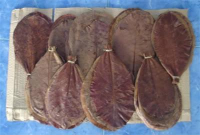 Indian Almond Leaves IndainalmondLeaves