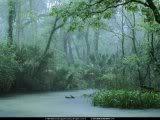 Bosque de la lluvia
