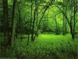 Bosque del sonido