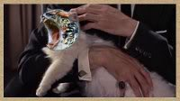 Amazon, Warner Bros in Talks for LOTR Series Adaptation: Variety - Page 25 Lolcat-petting2