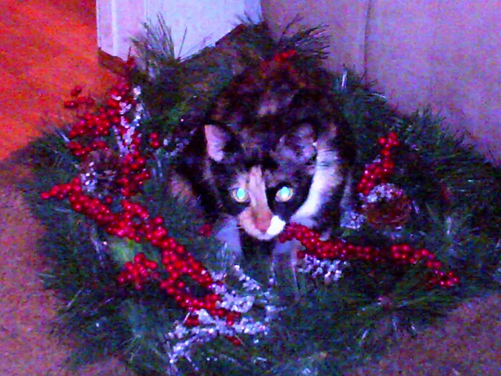 holiday cats photo: cat in a wreath Annettespix005.jpg