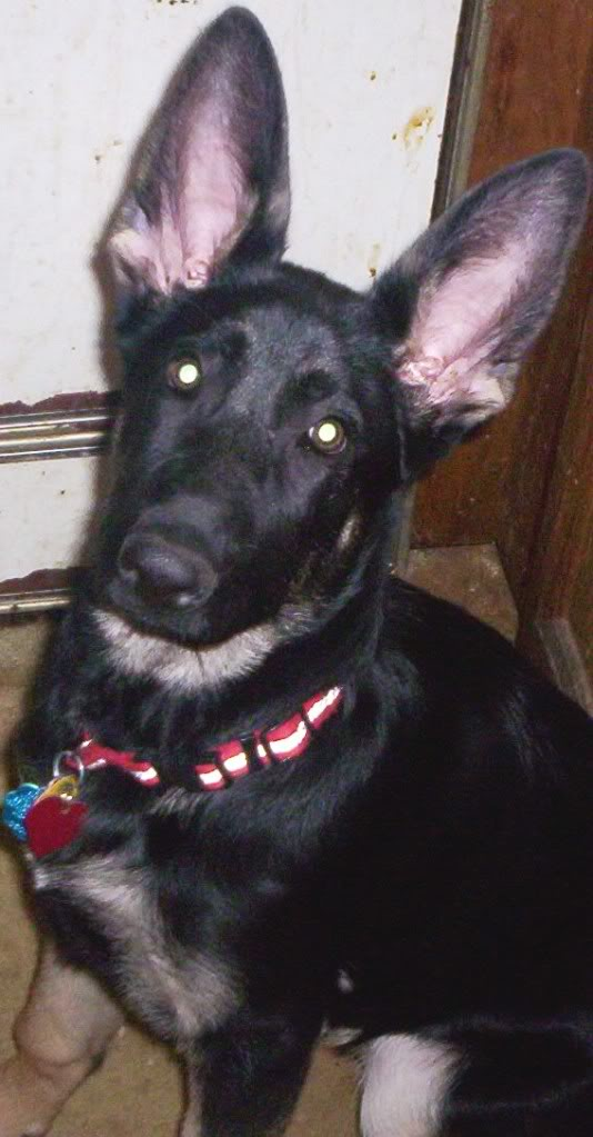 Post pictures of your pets! Zena