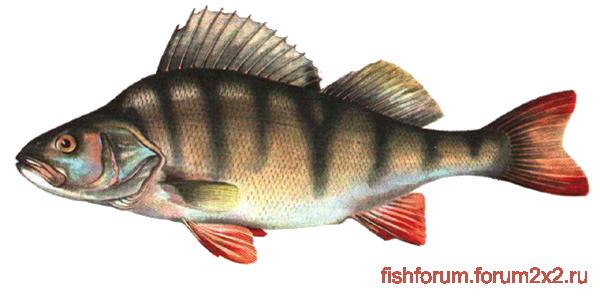 Рыбалка 2095bd191e071c1fdac5c4ff064c4b47
