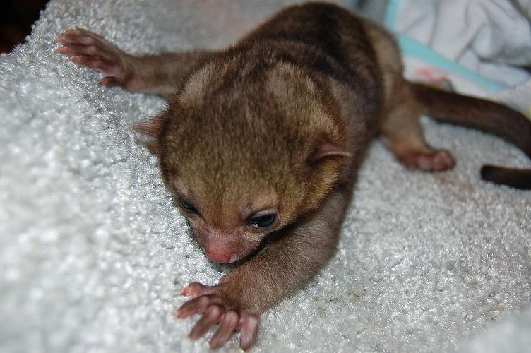 Awwww...my new baby boy :) Kink2