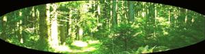 Bosque de Illirith