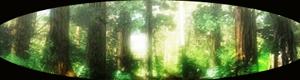 Bosque de Kaindra