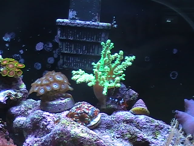 30 gal long reef tank Mytank2-2510004