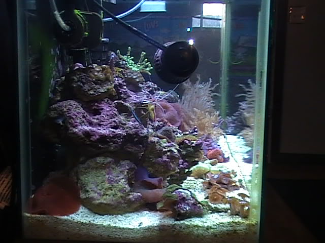 30 gal long reef tank Mytank2-2510007
